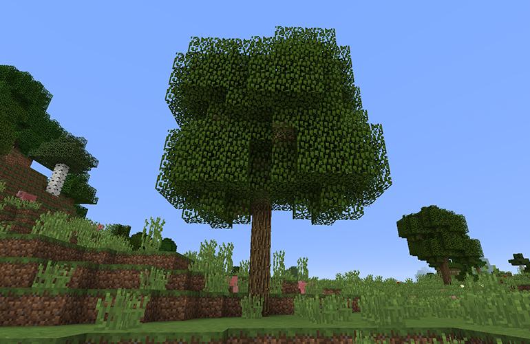 オークの巨木